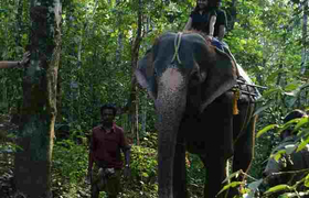 Reitelefant im Nationalpark Periyar