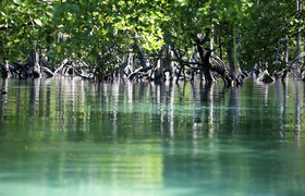 Mergui-Mangroves