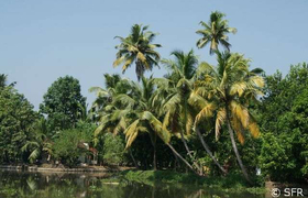 Landschaft in den Backwaters