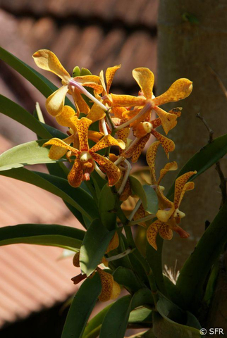 Orchidee mit Muster