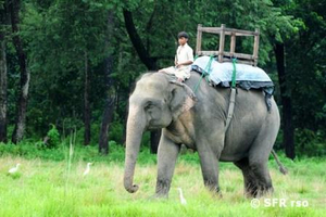 Elefant im Chitwan Nationalpark