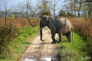 Elefant bei Safari